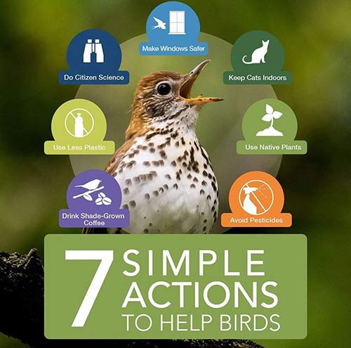 7 actions to save birds.
