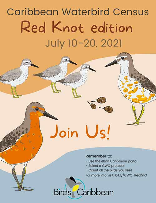 Caribbean Waterbird Census, Red Knot Edition, July, 2021.